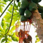 Colhedor de Frutas Tramontina sem Cabo
